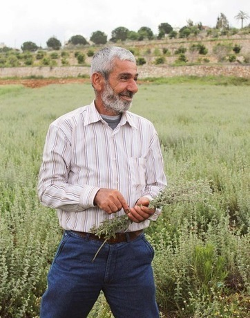 Taming the Wild Thyme:  A Visit to a Za'atar Farm in Lebanon   Grower Tour | Charliban Lebnen | Scoop.it
