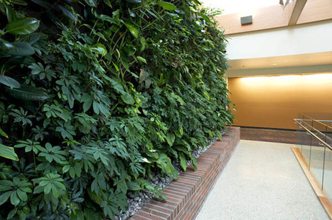 Medical school building in Lebanon will have 'true living wall' - Daily Journal of Commerce | Vertical Farm - Food Factory | Scoop.it