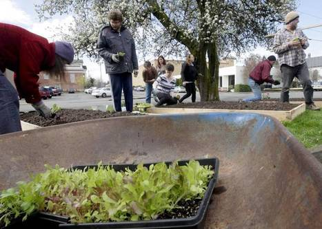 Library's garden partnership has double yield of food, community | Vertical Farm - Food Factory | Scoop.it