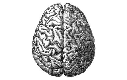 How Does My Brain Respond to Collaboration? | Communities Collaborating Institute Online | Knowledge Management, Resilience and Complexity | Scoop.it