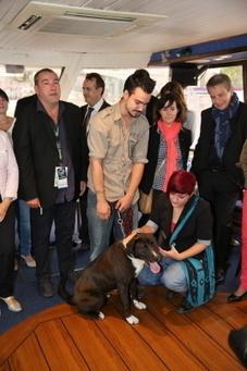 Le chien battu de l'an dernier devient la mascotte de Musilac | CaniCatNews-actualité | Scoop.it