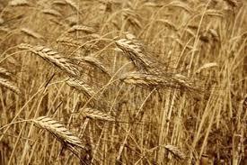 La planète souffre d'une crise des engrais - le Monde   Veille Scientifique Agroalimentaire - Agronomie   Scoop.it