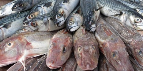 #Global #Fish #Stocks #Depleted to 'Alarming' Levels | Farming, Forests, Water, Fishing and Environment | Scoop.it