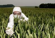 Quelle est l'influence des OGM sur la santé ? | Actualités & Tendances | Scoop.it