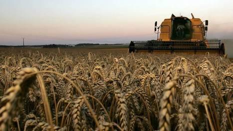 France: vers une moisson du blé catastrophique à cause des intempéries | Revue de presse agricole de la FUGEA | Scoop.it