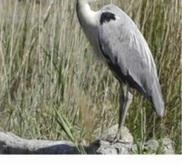 Lac Ksar Jdid à Errachidia, une richesse naturelle et écologique - libération | Ecotourisme au Maroc | Scoop.it