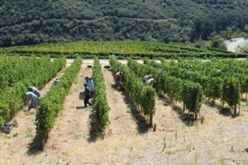 Quinta do Noval declares 'small quantity' of Port 2013 vintage | Autour du vin | Scoop.it