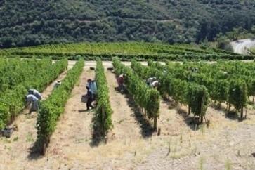 Quinta do Noval declares 'small quantity' of Port 2013 vintage | Autour du vin | Scoop.it