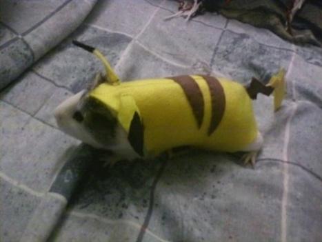 Pikachu, the Guinea Pig [Cosplay] | Geek On | Scoop.it