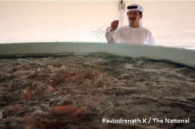UAE aquaponics project hailed as a successUAE - The Official Web Site - News | Business in UAE | Scoop.it
