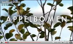 Tuinen.nl - dé inspiratiebron voor tuin- en buitenleven!   Groene vingers   Scoop.it
