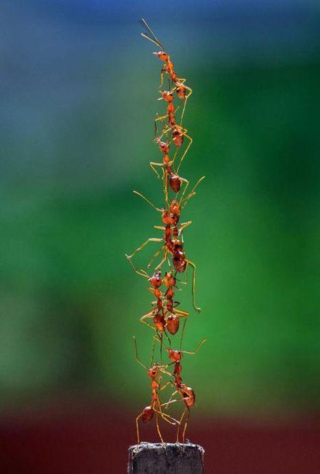 Plantes OGM : maintenant les insectes leur résistent | Abeilles, intoxications et informations | Scoop.it
