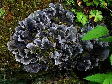 Une enquête sur les lichens forestiers en Auvergne et dans le Massif-Central | Auvergne Patrimoine | Scoop.it