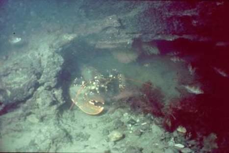 El pueblo sumergido de 8.000 años de antigüedad descubierto gracias a una langosta | ArqueoNet | Scoop.it
