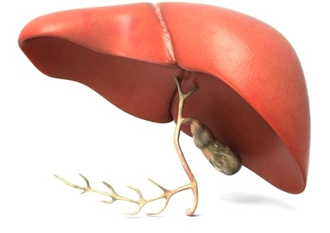 Liver Transplant in India : Topic Overview | Medical Tourism | Scoop.it