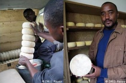 DRC Business: How A Congolese Produces Gouda Cheese in Africa - Africa Business Jump Start | Re Africa News | Scoop.it