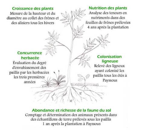 Le paillage: que des avantages (ou presque)! | Les colocs du jardin | Scoop.it