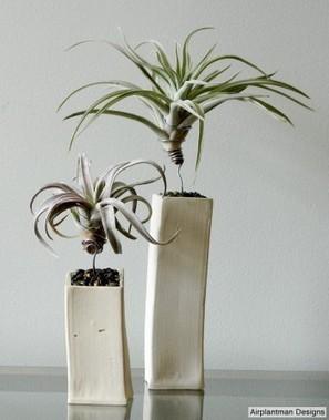 Dirt Du Jour   Air plants get wired   Annie Haven   Haven Brand   Scoop.it