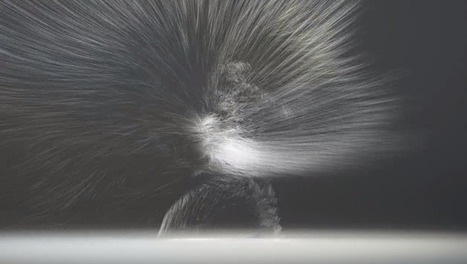 Video Reduces Kung Fu To Its Essence, And It's Gorgeous | data duty | Scoop.it