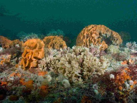 Marine life makes blooming good comeback   Fisheries and coastal communities   Scoop.it
