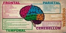 Una investigación concluye que la inteligencia es esencialmente social | Neurociencias y Aprendizaje | Scoop.it