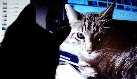 Google's Artificial Brain Learns to Find Cat Videos | Good Advice | Scoop.it