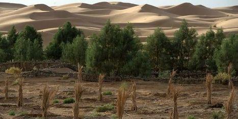 COP22: les cinq travaux de Marrakech | Histoire et géographie-TICE-Lycée professionnel. | Scoop.it