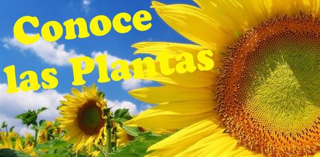 Conoce las Plantas | Gaia Ways | Scoop.it