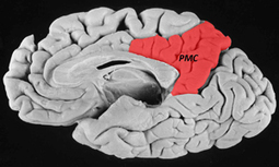 Mathematics or memory? Study charts collision course in brain - Office of Communications & Public Affairs - Stanford University School of Medicine | Early Brain Development | Scoop.it