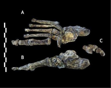 Homo naledi, nueva especie de homínido descubierta en África   Biología y Geología   Scoop.it