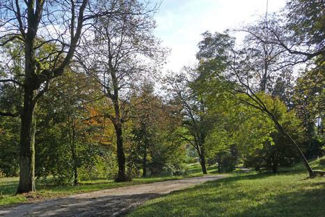 Les arbres aiment la lumière | The Blog's Revue by OlivierSC | Scoop.it