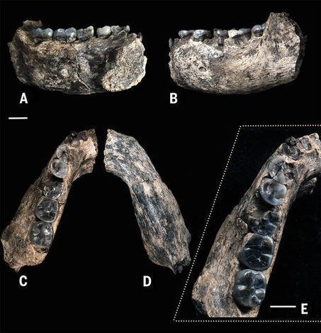 Paléontologie : une mandibule africaine vieillit le genre humain de 400000 ans | Aux origines | Scoop.it