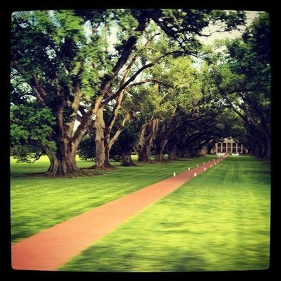 Thanks to Sparrow... | Facebook | Oak Alley Plantation: Things to see! | Scoop.it