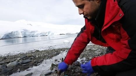 Nanopartículas antárticas para curar y producir energía | Las Matemáticas Aplicada en las Naturaleza | Scoop.it