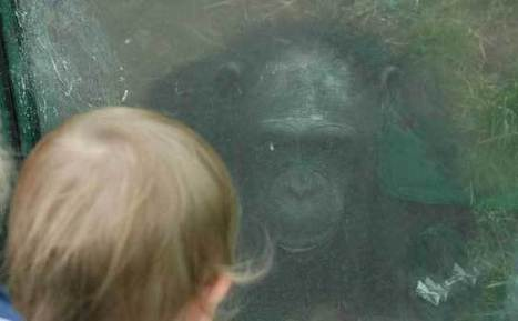 La chimpancé que ayudó a hablar por primera vez a un niño autista | Ética y virtudes | Scoop.it