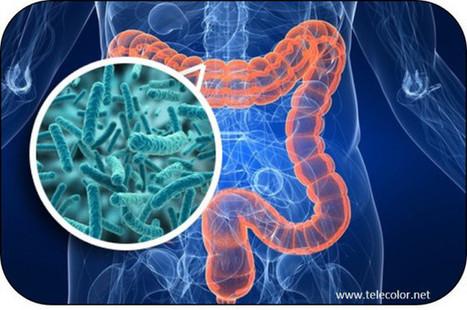 Microbiota: individuati batteri associati ad obesità e fegato grasso | Il mio amico pediatra | Scoop.it