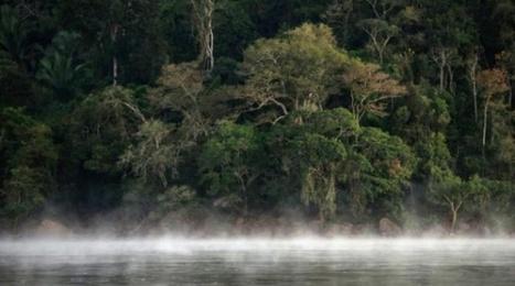En Amazonie, des agriculteurs s'enrichissent tout en replantant la forêt | 694028 | Scoop.it