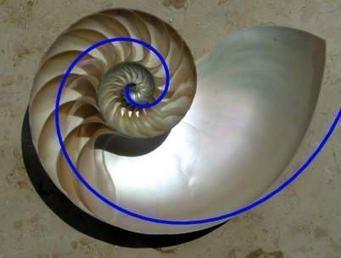 Sacred geometry Jeff Andrews's Photos | Facebook | Arte 25 Scenarii | Scoop.it