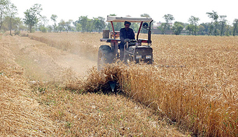 Wheat procurement from Apr 15 - Business Recorder | Supply Management | Scoop.it