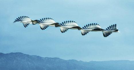 Mesmerizing Photos Capture the Flight Patterns of Birds   Anomie's Child   Scoop.it