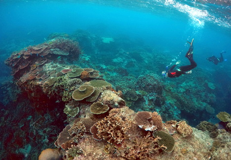 Great #Barrier Reef: #Scientists Send Letter To #Australia PM, Call For Action To Save The #Bleaching-Damaged Structure | Messenger for mother Earth | Scoop.it