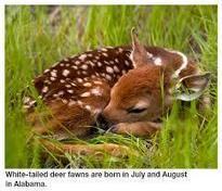 Heath Detweiler and a little deer | Heath Detweiler | Scoop.it
