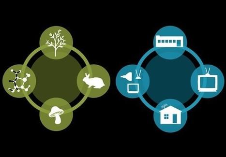 Quando si Parla di Innovazione di Prodotto in Chiave Green nelle PMI… | Innovazione & Impresa | Scoop.it