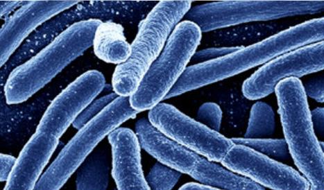 Escherichia coli entero agregativa (ECEA) | Escherichia coli | Scoop.it