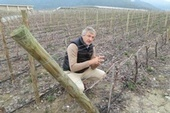 Wine Review Online - Viña Vik: A Dream Coming True in Chile | Wine from Down Under | Scoop.it