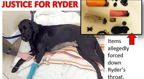 Crown Counsel, British Columbia provincial court, Honourable Judge, British Columbia provincial court: JUSTICE FOR RYDER THE TORTURED DOG | Saving STRAYS, PETS and SHELTER ANIMALS~ | Scoop.it