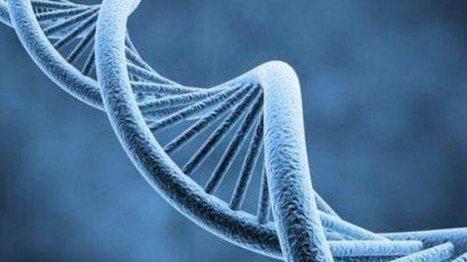 Marcador de ADN ayudará a salvar pacientes con Hepatitis B - El Comercio | Ciencias | Scoop.it