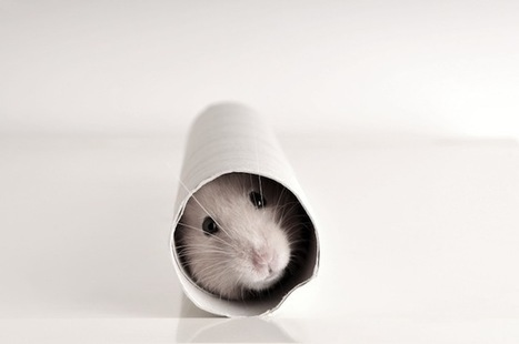 Is Content Marketing a Hamster Wheel You Can't Escape? | PRactical | Scoop.it