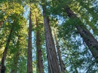 Japan's Forest Therapy tracks healing powers of forests | Geography Ed | Scoop.it