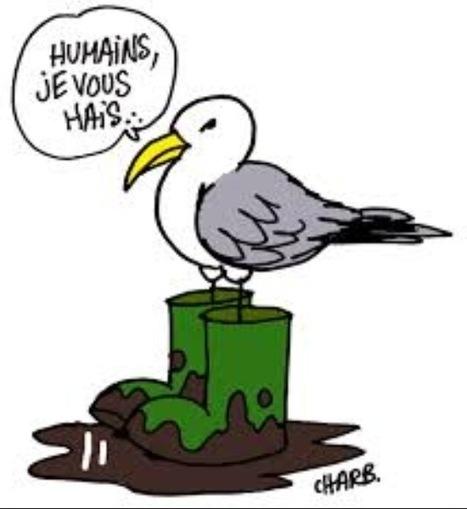 23 illustrations signées Charlie Hebdo pour la cause animale   Ces animaux sauvages ou domestiques maltraités par l'homme   Scoop.it